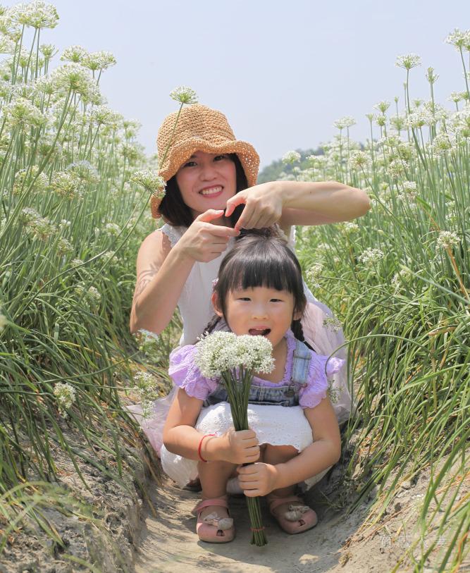 2020大溪韭菜花節9月盛開,夢幻純白花田收費50元,還可以順便去大溪老街吃午餐